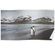 King Penguins Poster