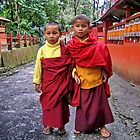 young monks. sikkim, india by tim buckley | bodhiimages