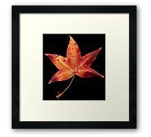 Fallen Leave #1 Framed Print