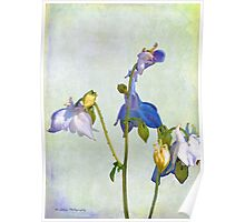 Collecting Columbine Poster