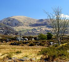The Rhinogs above Cwmnantcol, North Wales by John Williams