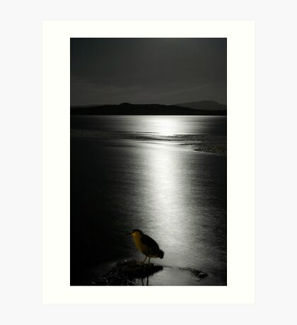 Night Heron Art Print