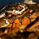 Portrait of a Crustacean. by FraserJ