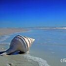 The Shell on the Beach by Pam Moore