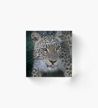 Sade Persian Leopard Acrylic Block