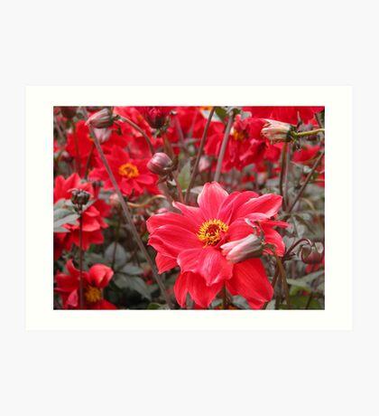 Sea of red flowers Art Print