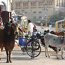 Morning in Jaiselmir, Rajasthan, India by RIYAZ POCKETWALA