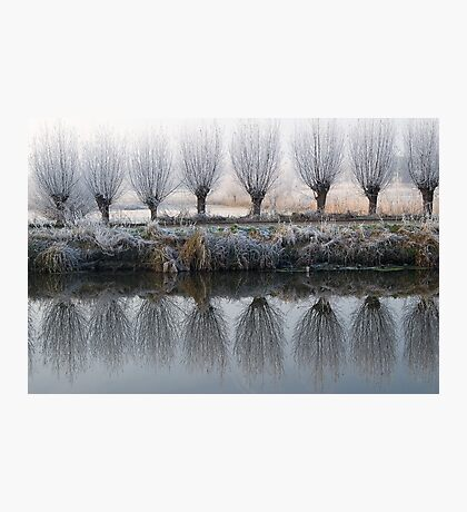 willow mirror Photographic Print