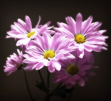 Flowers by Dave Chafin Photography