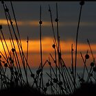 Within the Reeds 3 by kelliejane