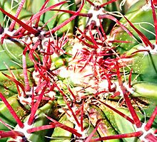 Red Cactus Thorns by Amy McDaniel