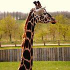 Giraffe by GraceEloise