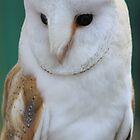 Barn Owl by DutchLumix