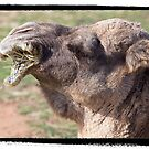 Male Camel by James Troi