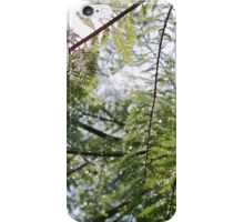 Glistening Fir iPhone Case/Skin