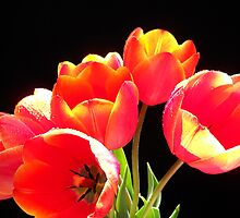 Spring Tulips. by Vitta