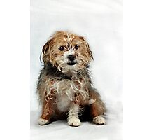 Little Scruffy Duffs Photographic Print