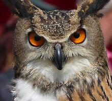 The Eurasian Eagle-owl by angeljootje