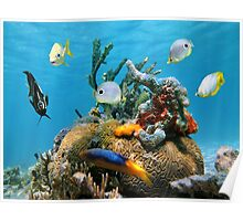 Brain coral with colorful sea sponges and fish Poster
