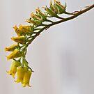 Cactus Flower by Nala