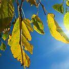 Stillness in sunlight by David Rozario