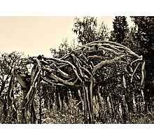 Old Wooden Horse Photographic Print