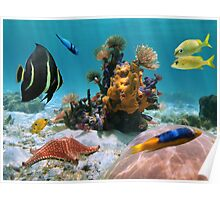 Colorful tropical marine life underwater Poster