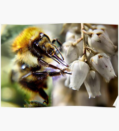 don't worry bee happy ..... Poster