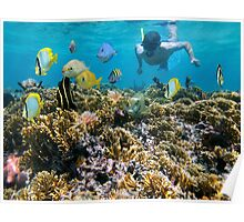 Coral reef fish and snorkeler Poster