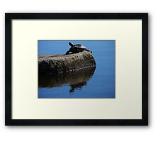 Snapping turtle resting on a rock... Framed Print