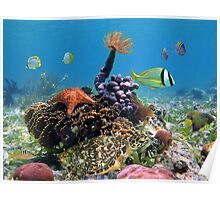 Green turtle with colorful marine life Poster