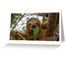 Baby Brown throated Three toed sloth Greeting Card