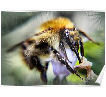 busy bee ... Poster