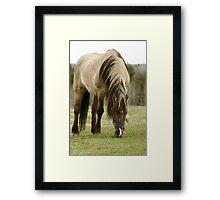 Horse In a Hastings Nova Scotia field. Framed Print