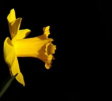 Yellow (With Green) by artisandelimage