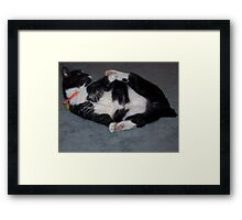 No tail so play with Paws Framed Print