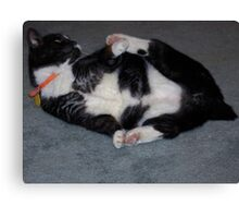 No tail so play with Paws Canvas Print