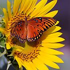 Butterfly with Sunflower by PaulWilkinson