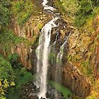 Daggs Falls by Penny Smith