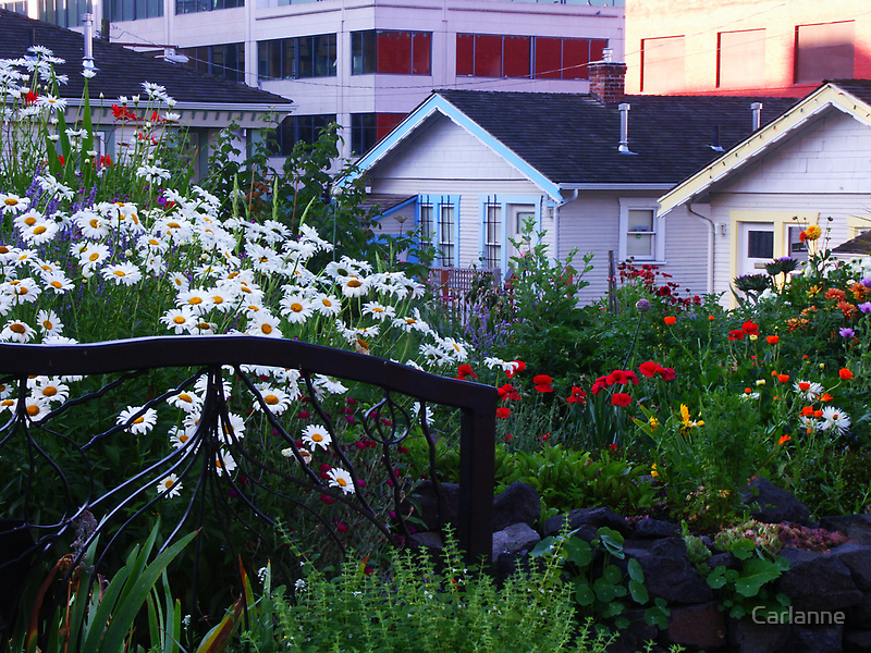 Pea Patch in Belltown by Carlanne McCrystal