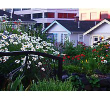 Pea Patch in Belltown Photographic Print