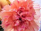 Pink Ruffles by Audrey Clarke