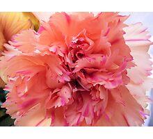 Pink Ruffles Photographic Print