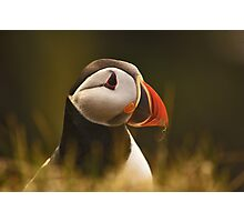 I Am Not Posing For You This Year Photographic Print