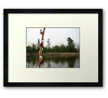 Pussy Willow Blooms, Mississippi River Photography Framed Print