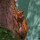 Squirrel in a Tree with a Nut by Carlanne McCrystal
