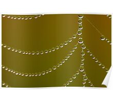Strings of dew pearls..spider web Poster