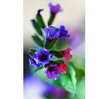 The Magnificent Mrs. Moon -- Pulmonaria Photographic Print
