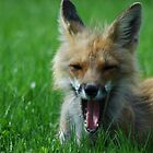 The Big Yawn by ngrant