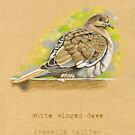 White Winged Dove Bird by Revelle Taillon